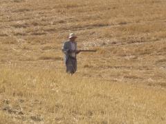 Scéne de chasse en Algérie