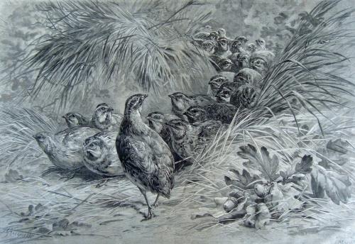 le départ des cailles, hector giacomelli