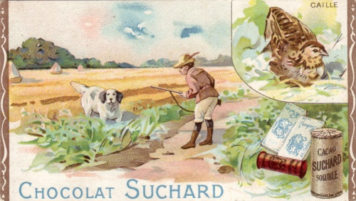 chasse caille, chocolat suchard