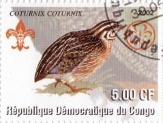 timbre caille Congo