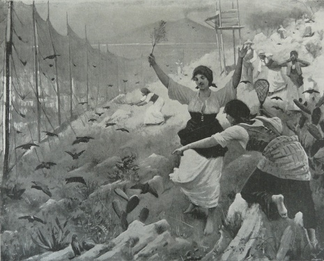 quail netting in southern italy, the graphic, 03 sept 1892