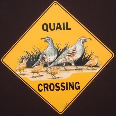 quailcolor
