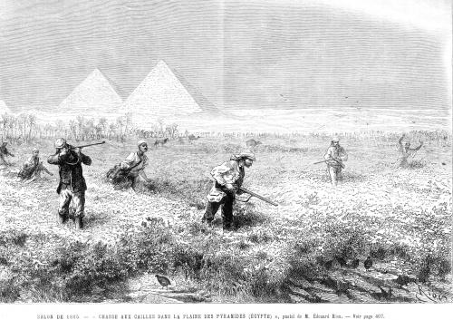 chasse aux cailles dans la plaine des pyramides