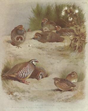 gravure Archibald thornburn