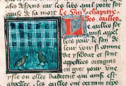 Cailles dans les herbes, De Proprietatibus rerum