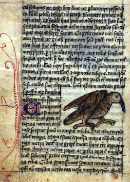 Page Bestiarius, 14eme siècle