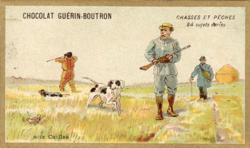 guerin boutron chasse caille
