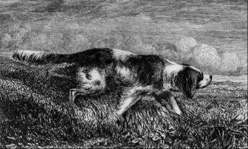 gravure chien d'arret