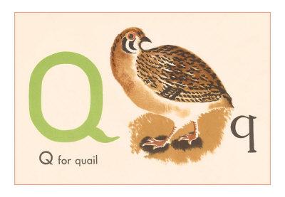 alphabet quail