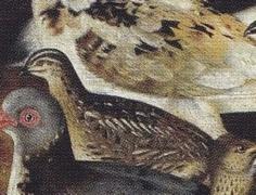 les oiseaux 1619 detail