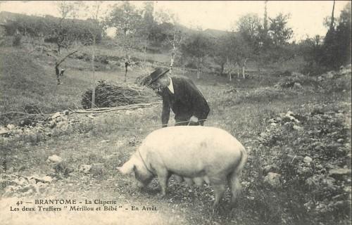 cochon en arret