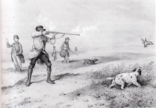 chasse à la caille