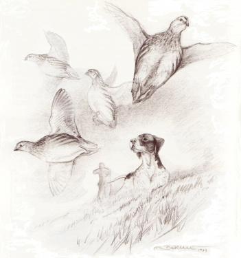 F. Berille, la caille des blés